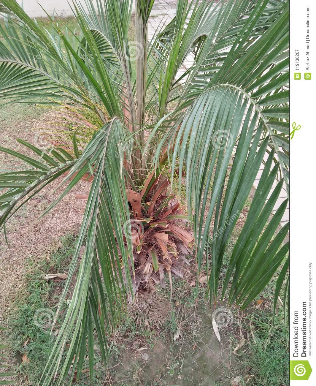 golden cane palm care instructions
